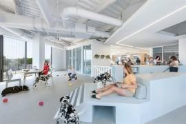 可以带宠物上班的公司,办公室是怎么设计的?